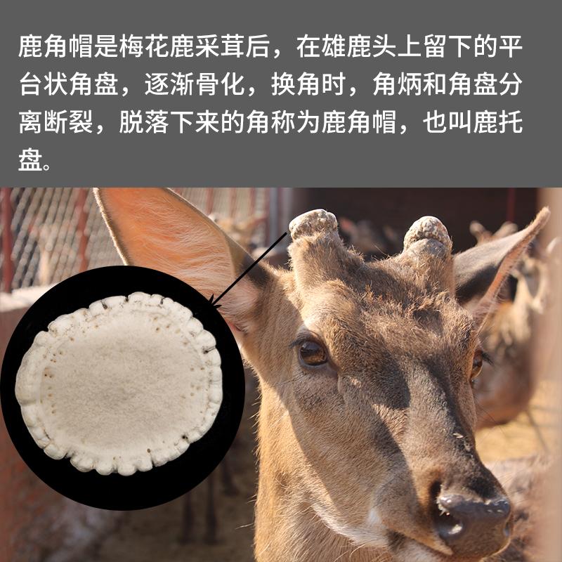 吉林梅花鹿鹿角帽 纯正鹿托盘粉 可免费打粉